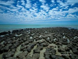 Battle of the Stromatolites by FireflyPhotosAust