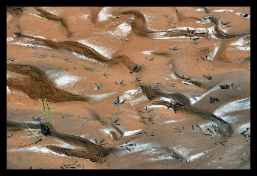 Tracks in the mud. by Siamese82