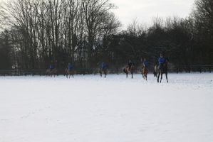 Racehorses being kept on the move in Newmarket by Loves2dive