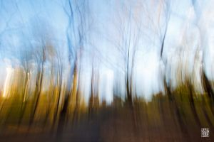 Central Park in blur by sylvaincollet