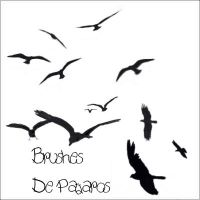Brushes de Pajaros by letsgocrazycrazy