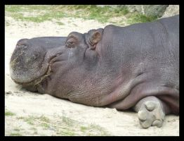 Hippo by pirate-penguin-luver