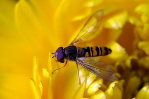 Flower Fly Paradice by organicvision