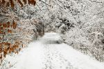 snowy path by BrianWolfe
