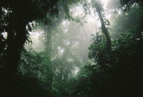 Rainforest by skoora