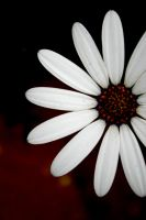 White Flower by jamesabutler