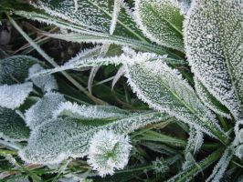 Icy Leaves 326026 by StockProject1