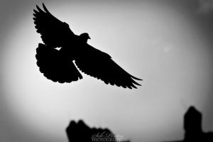 Pigeon into the light by Seb-Photos