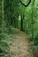 Forest Path 3 by ThePurpleYard-Stock