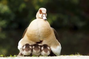 How Many Goslings Fit in One Mother Goose? by thrumyeye