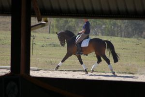 Dressage stock 2 by Chunga-Stock