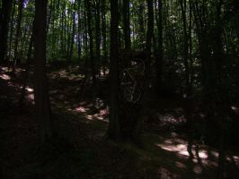 Bicycle in forest by Norhi