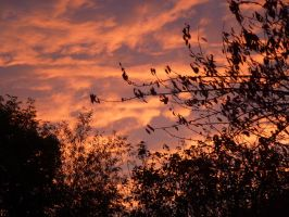 Saturday Evening from Bedroom Window 4 by SrTw
