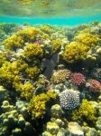 Reef Red Sea by LeFay00