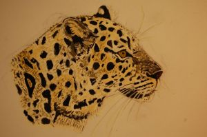 Panthera pardus by Mararda