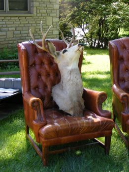 Weird Deer Head in a Chair 2 by OsorrisStock