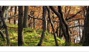 Twisted woods by Rajmund67