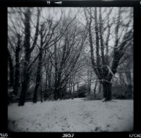 Holga: Trees by pet-rubber-duck