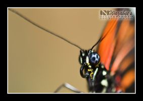 Butterfly 2 by wazabees