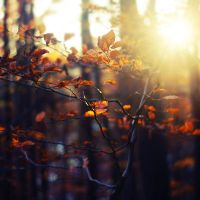 Autumn Feelings XXI by agatkk
