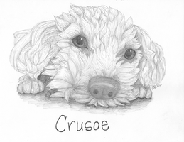 Crusoe by Shift-ing