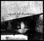 334 by evy-and-cats