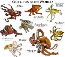 Octopus of the World by rogerdhall