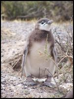 .little pinguin by Mortor