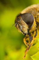 Dronefly Cleaning Up by Alliec