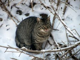 Winter Cat 2 by hm923