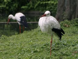 Two Storks by minimeany