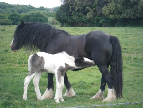 Mare with foal by M-Bphotography