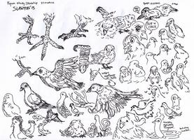 Sketches weekly: Studying Pigeons by Slawton