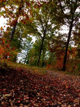 Fallen Leaves Canvasing The Ground by photography-94