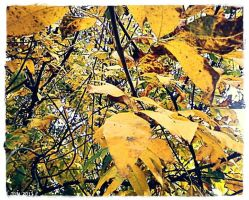 Yellow Leaves by JDM4CHRIST