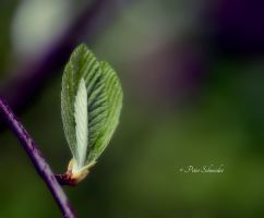 Green flame. by Phototubby