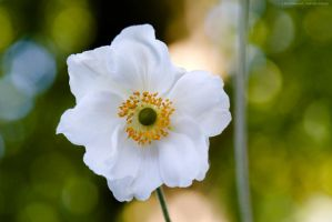 thimbleweed by emmbbee