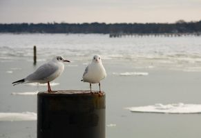 lazy seagulls by antarialus