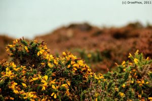 Plants on the Irish Coast... by DroePhos
