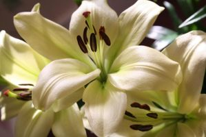 Lilies 1 by SkykoGirl