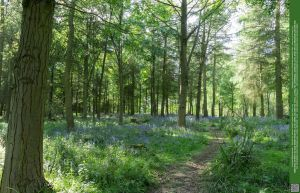 Glades of Blue 06 UNRESTRICTED by Elandria