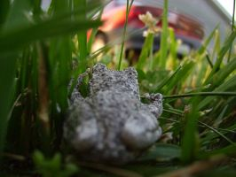 Tree Frog 11 of 24 by celticmaiden7