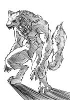 werewolf by davi-escorsin