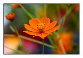 The Orange 1 by uk-antalya