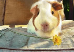 Guinea Pig by happyboy9112
