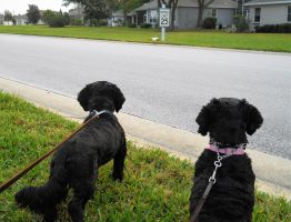 Tippy and Lily focused on the Ibis by knighttemplar1