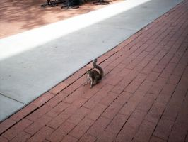 Not Just Any Squirrel by avalonaroundtheworld
