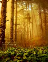 I Love Forest by AngeliaArt