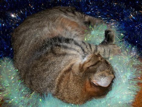 My Cat 2013 - Play in christmas tree chains by Shayha