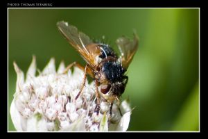 Wasp by tomba76